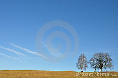 Two Lone trees