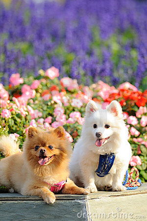Two lovely dogs