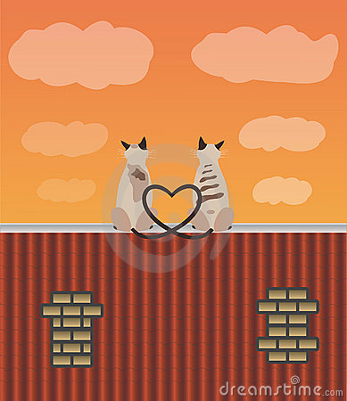 Two lovers cats on the roof