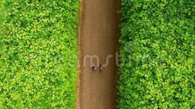 Two lovers are walking in the Beneath Castle and Park. Top view Aerial Dusseldorf Germany stock video footage