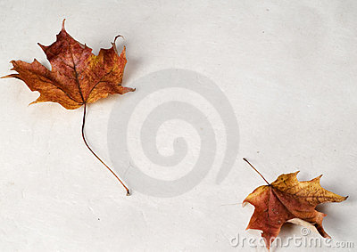 Two Maple Leafs