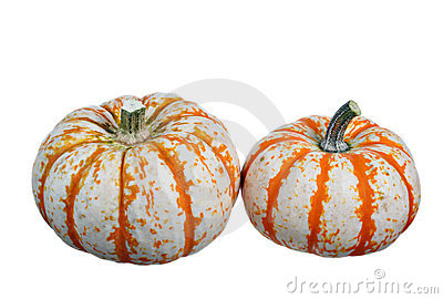 Two mini pumpkins