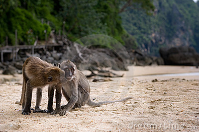 Two Monkeys on a Beach