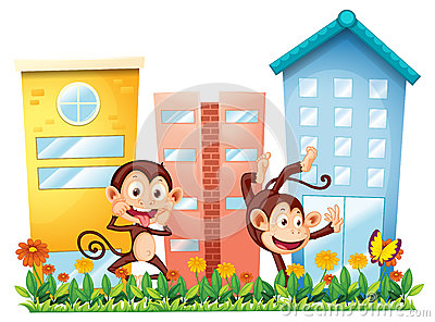 Two monkeys dancing in front of the buildings