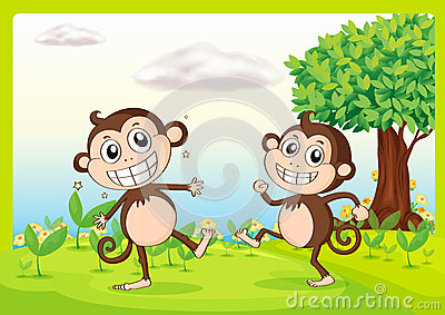 Two monkeys in nature