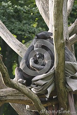 Two monkeys on a tree