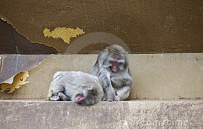 Two monkeys in zoo