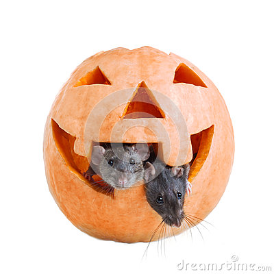 Two mouse and pumpkin halloween