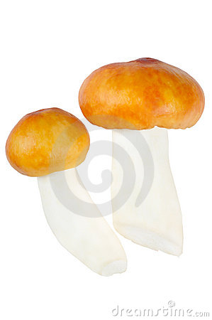 Two Mushrooms. Russula