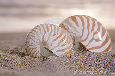 Two nautilus shells on beach, sunrise and  tropical sea