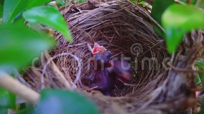 Two New Born Baby Bird On The Tree Stock Video - Video of ...