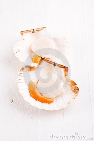 Two open raw scallops, on white wooden backdrop