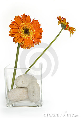 Free Two Orange Daisies Stock Photos - 4278133