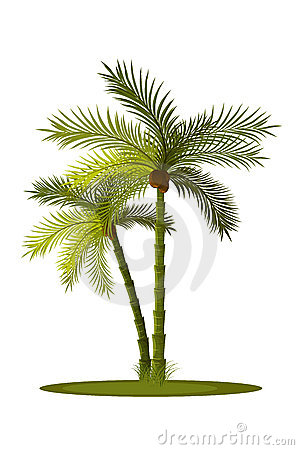 Two palm-tree
