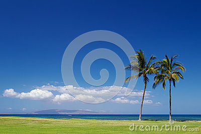 Two Palm trees on the beach Maui