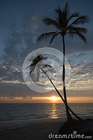 Two Palm Trees, Beach, Sunrise