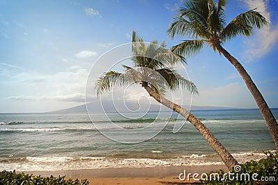Two Palm Trees Lean on Tropical Beach Ocean View