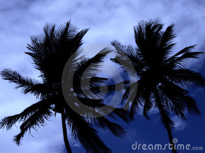 Two palm trees at midnight