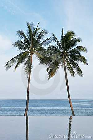 Two palm trees are reflected in a water