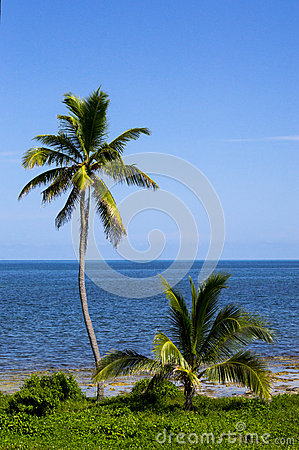 Two palm trees by the sea