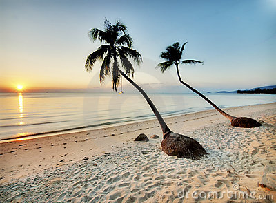 Two palms on a beach