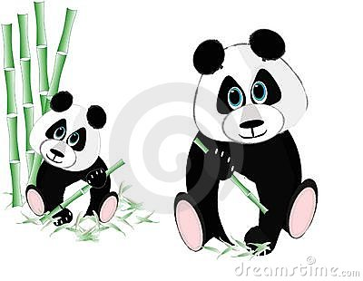 Two pandas eating bamboo...