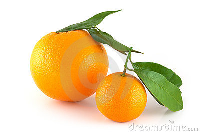 Two perfectly fresh oranges