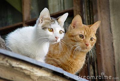 Two pet cats