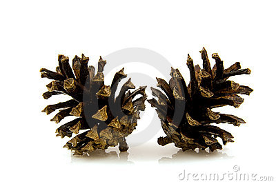 Two pine cones