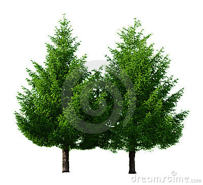 Free Two Pine Trees Royalty Free Stock Photos - 5775538