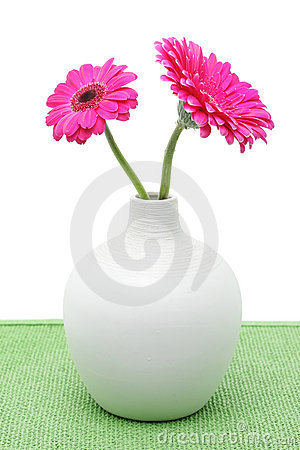 Two pink gerbera flowers in white vase