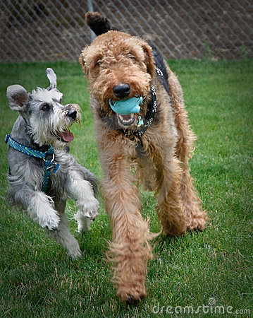 Free Two Playful Dogs Outdoors Royalty Free Stock Photo - 15410735