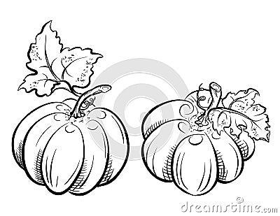 Two pumpkins.