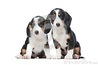 Two puppies