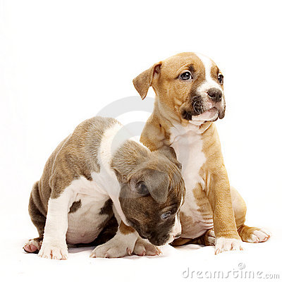 Free Two Puppies Stock Images - 413904