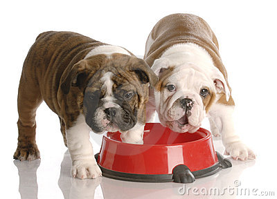 Two puppies at a dog food dish
