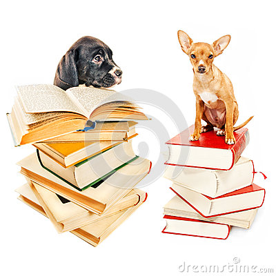 Free Two Puppies Posing With Books Stock Image - 27350521