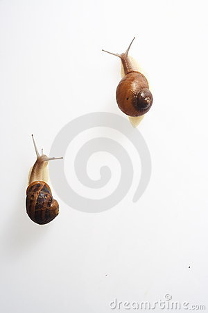 Free Two Racing Snails Royalty Free Stock Image - 6497646