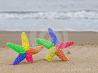 Two Rainbow Starfish on the Shoreline