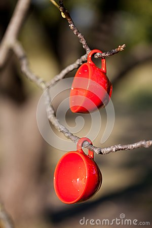 Two red cups on a tree