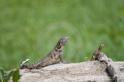 Two Reptiles