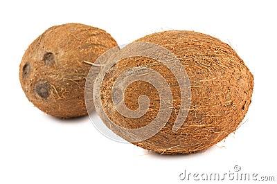 Two ripe coconuts