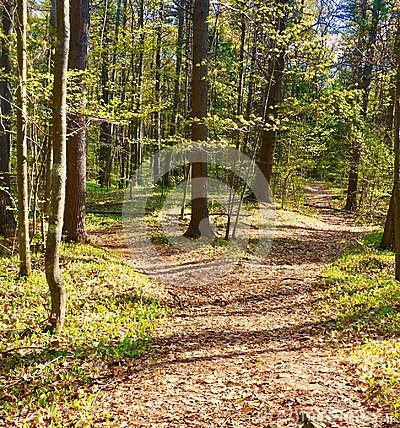 Free Two Roads Diverged In A Wood And I Took Stock Photos - 116554593