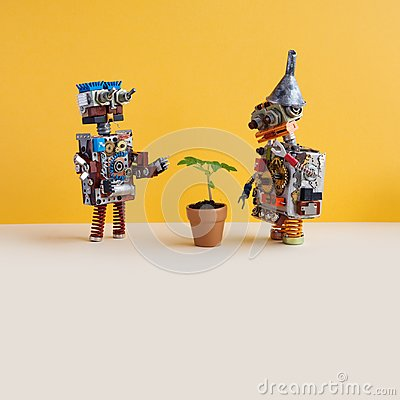 Free Two Robots Explores A Living Green Plant In A Flower Clay Pot. Artificial Intelligence Versus Organic Life Plant. Yellow Royalty Free Stock Photo - 117140315