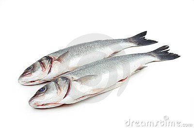 Two sea bass fish