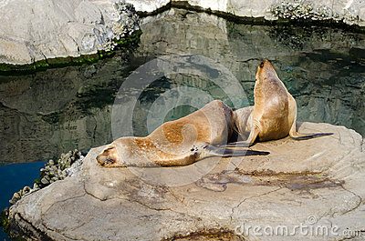 Two sea lions on a rock by the water