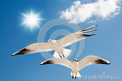 Two seagulls are flying