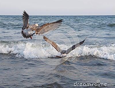 Relaxing Ocean Sounds w Seagulls - YouTube