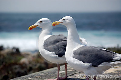 https://thumbs.dreamstime.com/x/two-seagulls-near-sea-6493054.jpg