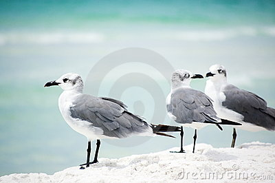 Two seagulls and one aside on the seashore
